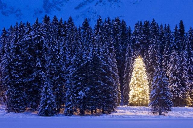 pinheiro-iluminado